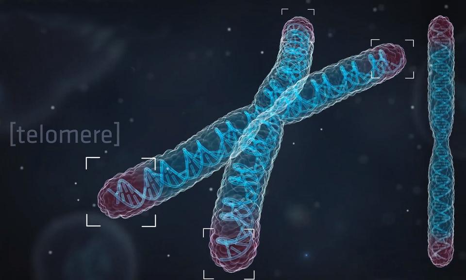Telomeeride mõju: revolutsiooniline viis elada kaua, nooruslikult ja tervelt